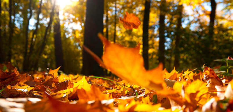 autumn leaves falling on ground material change