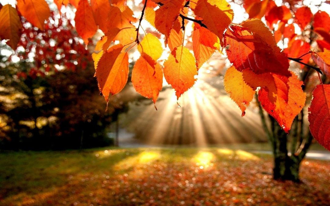 Image result for autumn leaves and sunshine